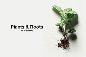 Plants & Roots Photo Pack