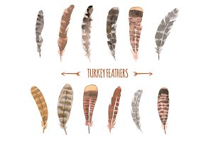 Watercolor Turkey Feathers