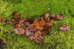 Leaves on green moss
