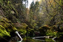 Beautiful river in the forest