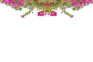 Floral Stationery White Background