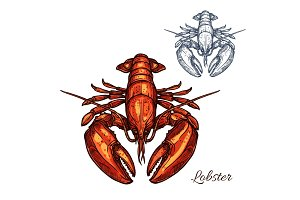 Lobster isolated sketch for seafood design