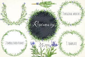 Rosemary. Watercolor clip art.