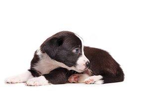 Cute puppy sadness