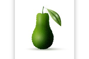Realistic vector avocado