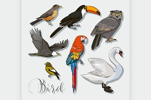 Bird collection set