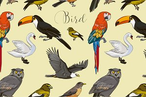 Bird collection pattern