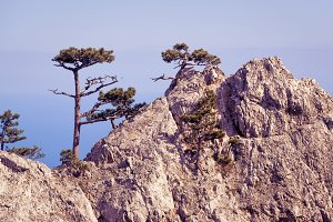 Trees on a rock