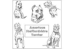 Freehand sketch illustration of American Pit Bull Terrier,