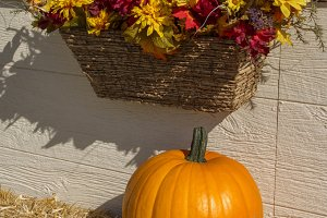 Pumpkin Display-vertical
