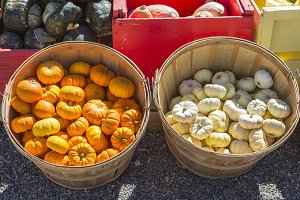 Farmer's Baskets of Mini Pumpkins