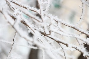 winter time idea, branches in hoarfrost