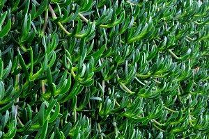 hanging succulents meadow
