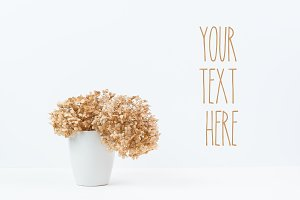 Natural Dried Hydrangea Flowers