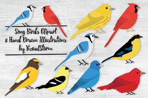 Song Bird Illustrations