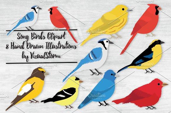 Song Bird Illustrations in Illustrations