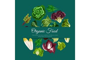Leafy salads vegetables vector poster
