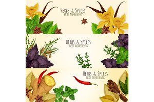 Herbs, spices culinary ingredients vector banners