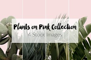 Plants on Pink ~ 4 Stock Photos