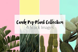 Candy Pop Plants Stock Photos