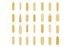 Wheat, rye and barley ear set
