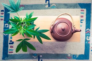 Cannabis Plant with a Teapot