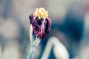 Elegant Dead Flowers