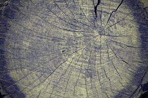 Tree texture (4 photos)