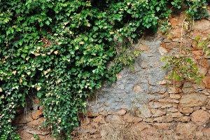 Plant Stone Wall