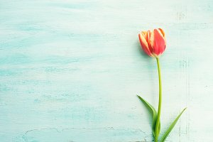 Spring easter tulip floral minimal pastel color background