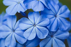 Beautiful blue flower background