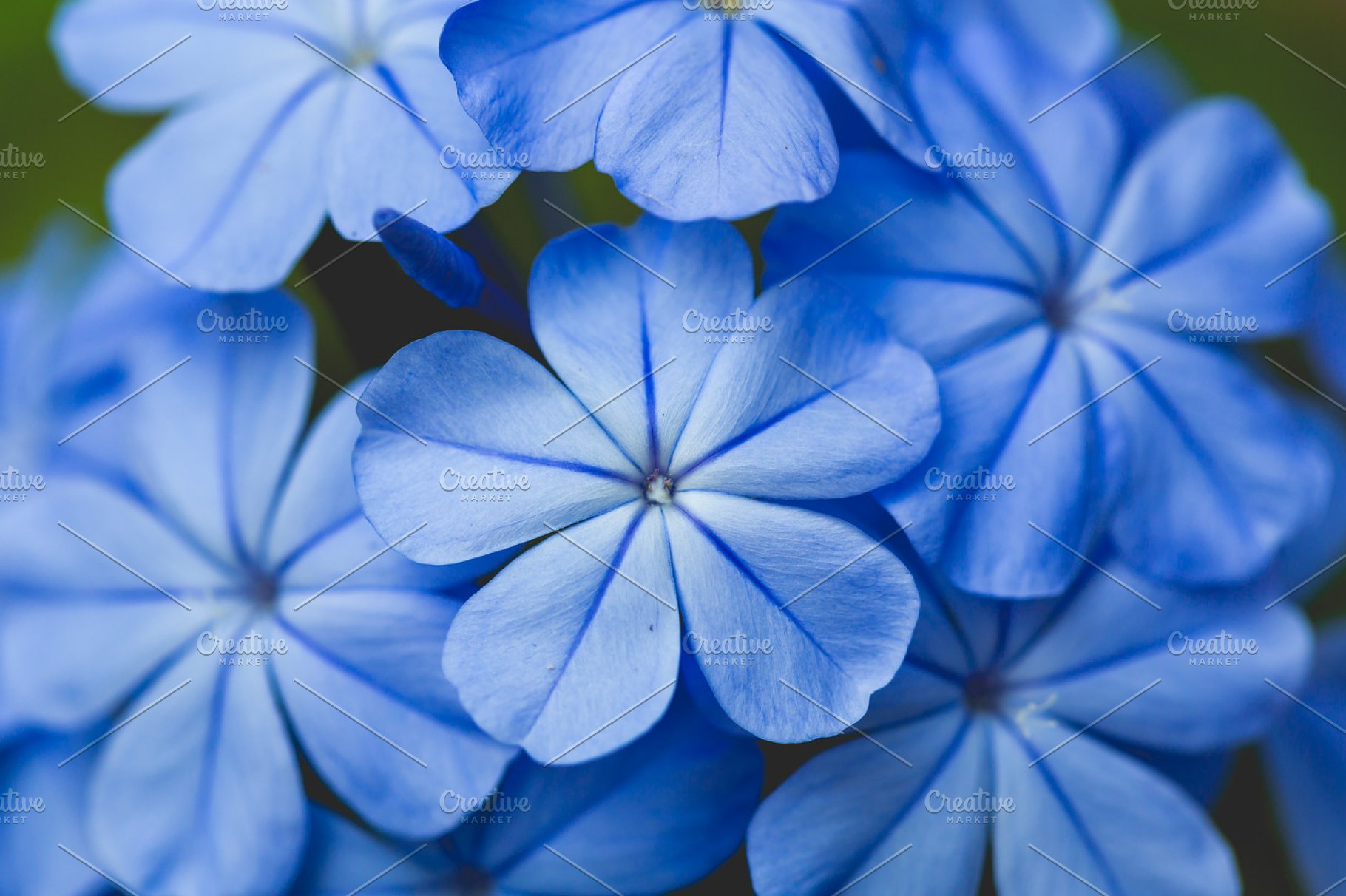 Beautiful Blue Flower Background High Quality Nature Stock
