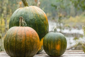 Orange and Green Pumpkins