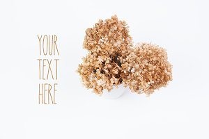 Natural Dried Hydrangea Background