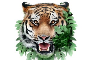Tiger in green leaves