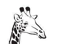 Vector of a giraffe head.