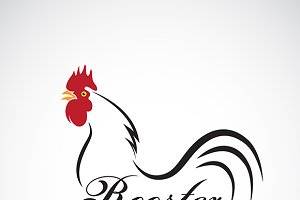 Vector of a rooster. Animal