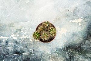 Flat lay cactus plant