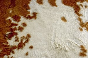 Red and white cow hide