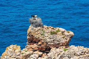 Rock near shore with nest of storks
