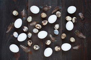 Chicken and quail eggs and feathers