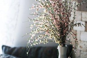 White spanish broom flowers
