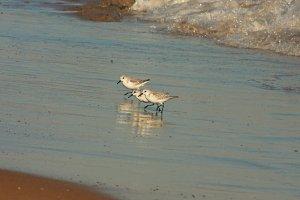 Sea birds and sea surf