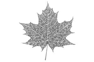 Black and white maple leaf