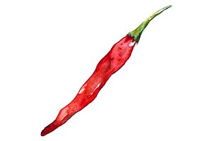 Watercolor red hot chili pepper