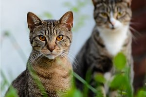 Two Cats Looking