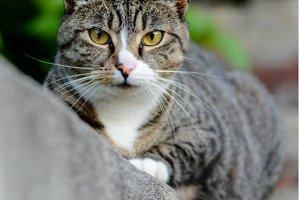 A Cat Starring