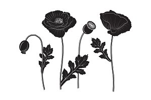 Set of poppy silhouettes