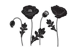 Set of poppy silhouettes