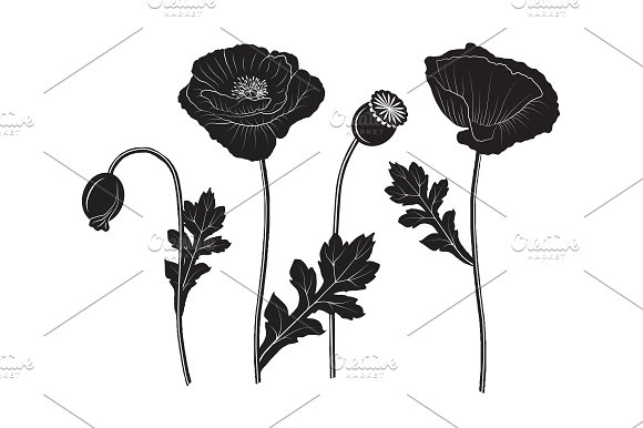 Set of poppy silhouettes illustrations creative market mightylinksfo